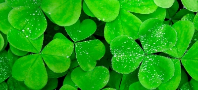 Verdes ornamentales